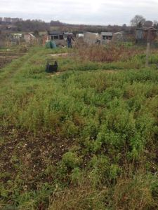 Allotment 2013:2014 - 01